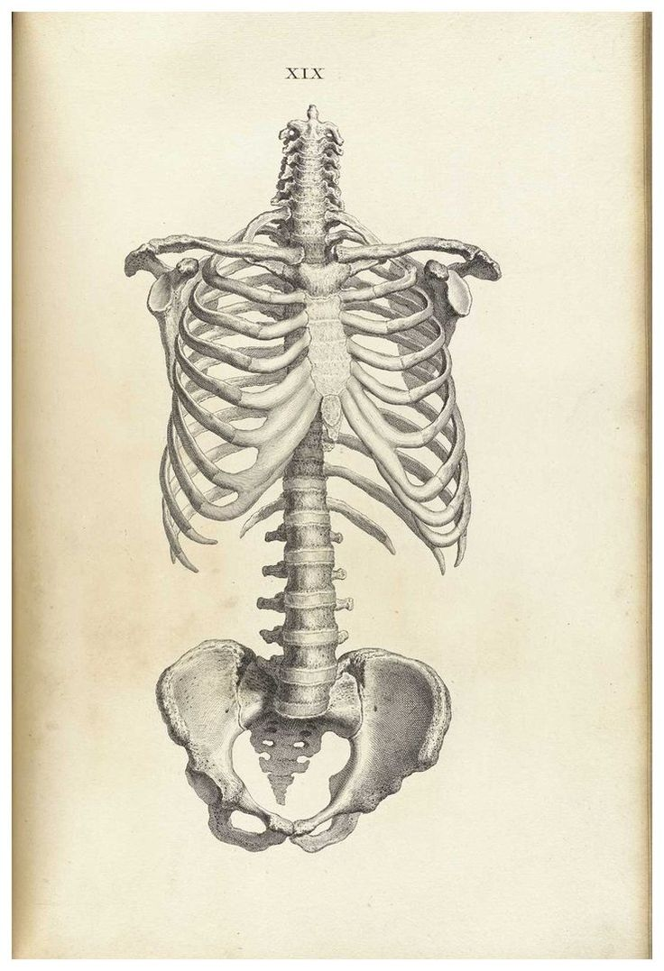 old-anatomy-drawings-rib-cage