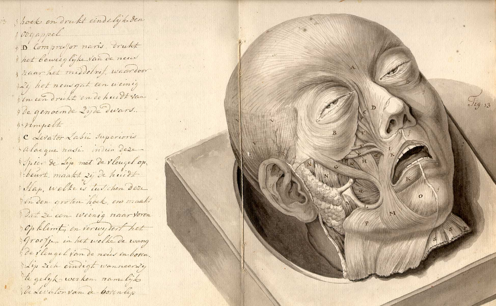 old-anatomy-drawings-skinned-head