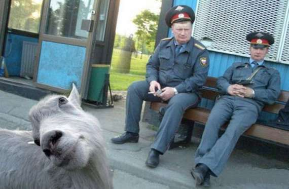 russian-police-fail-with-goat