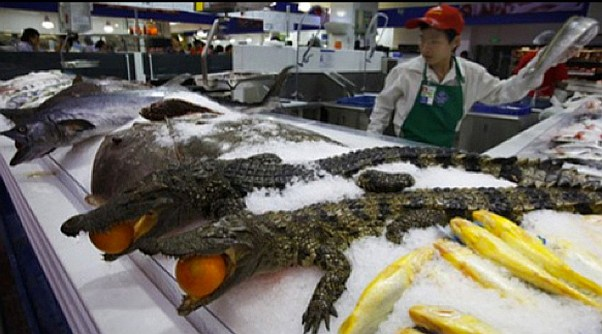 weird-china-crocs-and-eggs-2