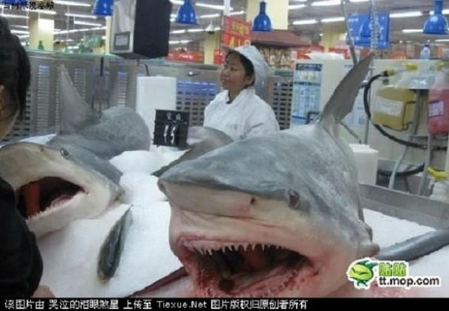 weird-china-shark-supper