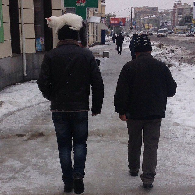 awesome-russia-cat-hat