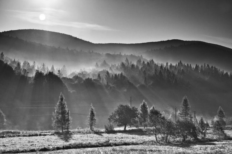 luc-kordas-bieszczady-trees