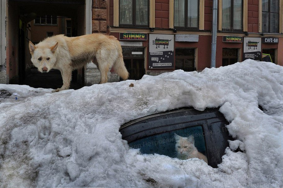 Awesome Russia - Sad Cat In Frozen Car