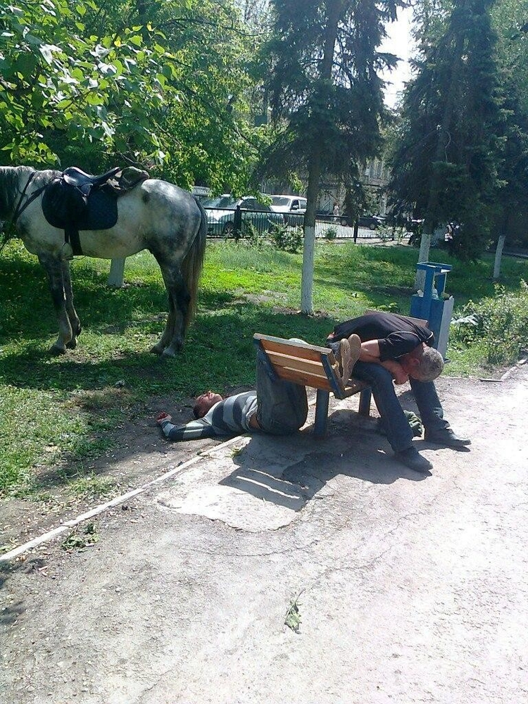 Photos From Russia - Fun Time With Horse
