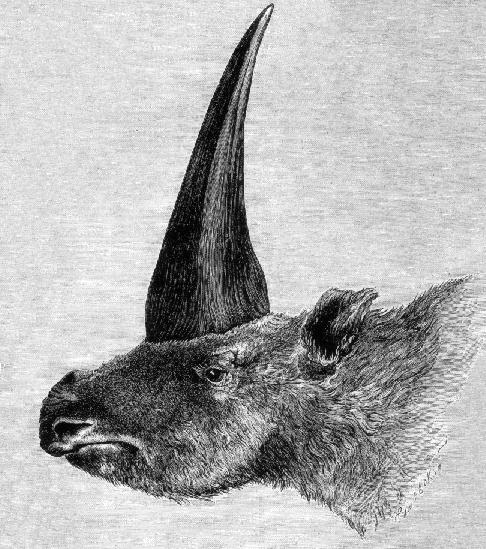Elasmotherium image