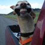 Stupid Dog Face