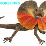 Lizard Found On Mars By Curiosity Rover