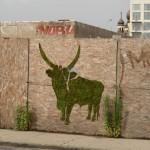 Moss Graffiti - Big Horn Cattle - The New School