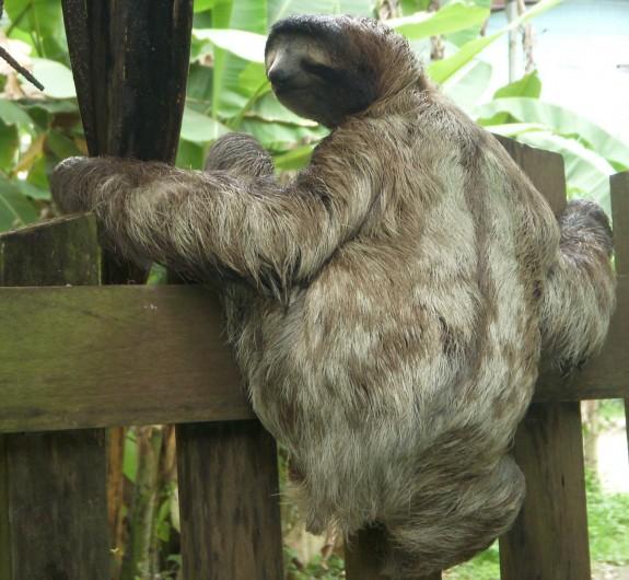Photos From A Sloth Sanctuary Lazer Horse
