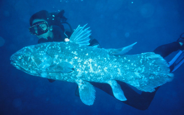 Lazarus taxon creatures once extinct raised from the dead for Are fish considered animals