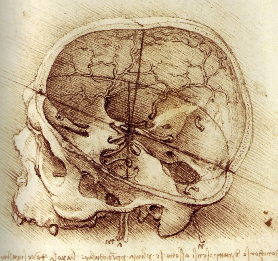 How To Draw A Horse Head Leonardo da Vinci: Rar...