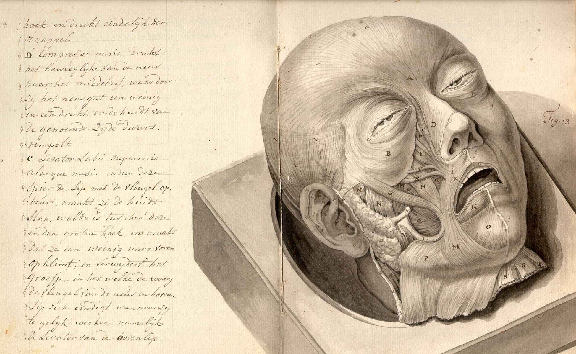 old-anatomy-drawings-skinned-head - Lazer Horse