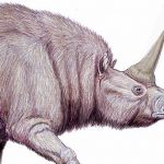 Elasmotherium: A Gigantic Extinct Unicorn